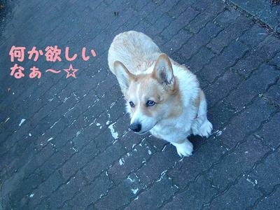 2011_0108_085245dscf0019_3