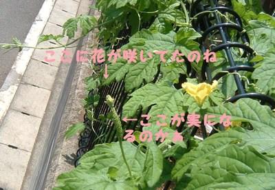 2011_0724_232915dscf0003